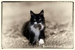 Nachbars-Katz